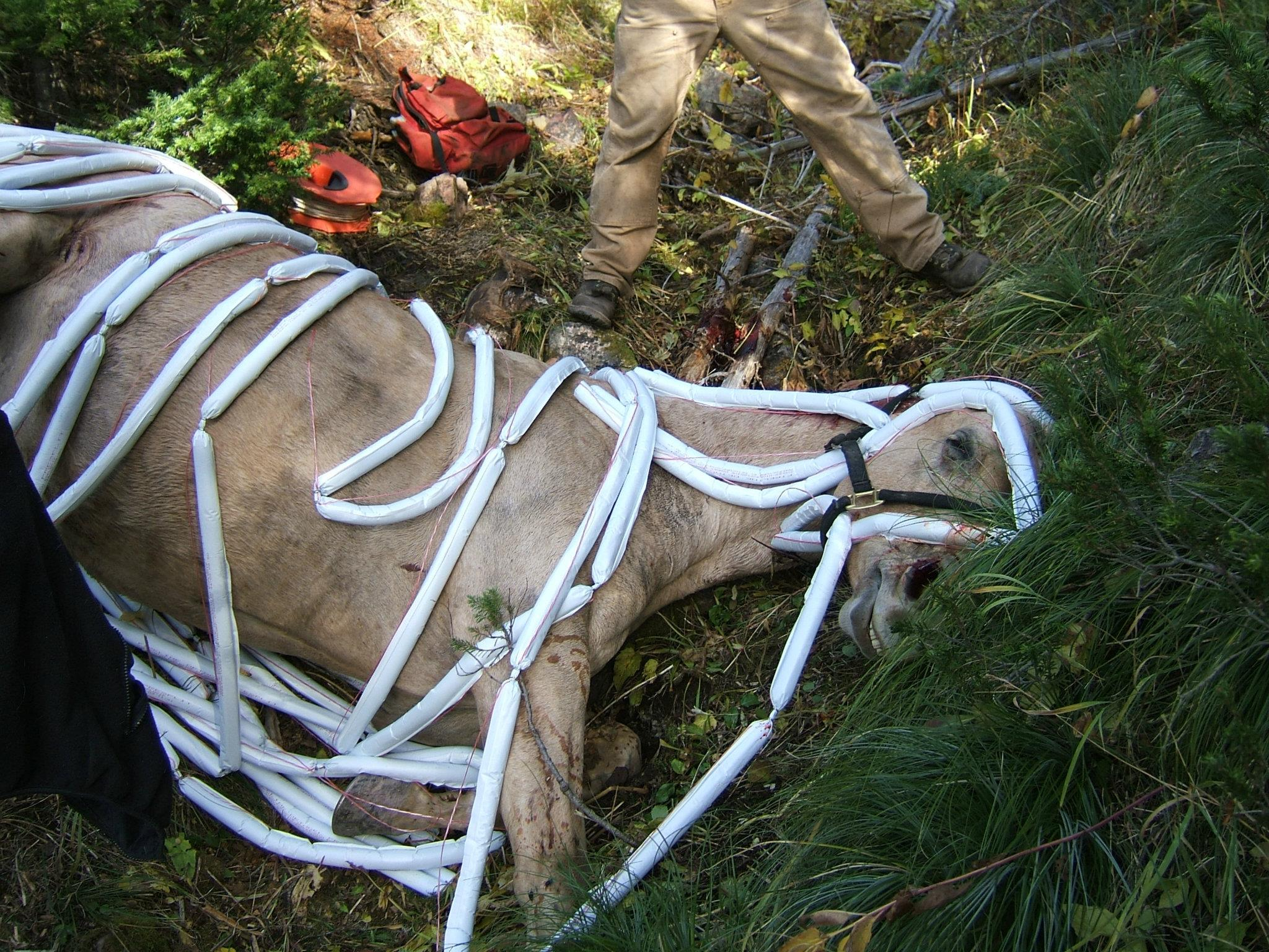 Photo of dead horse covered in explosives